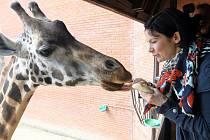Anna K. při křtu žirafy