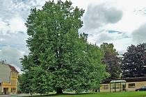 Chrastava má Strom republiky.