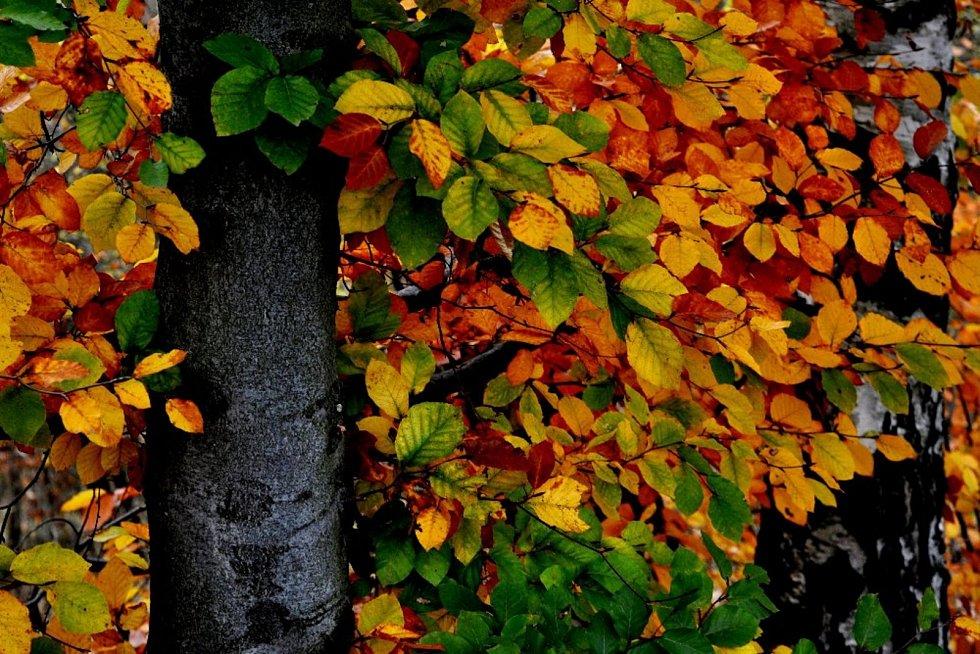 Podzimní převlékání