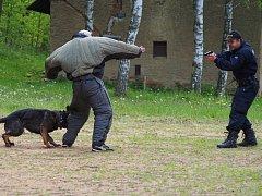 POLICEJNÍ PSI museli na soutěži projevit i svou statečnost a rozhodnost.