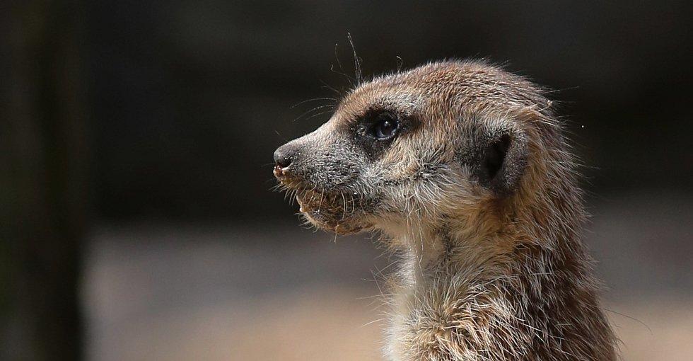 Zoologická zahrada v Liberci strádá, téměř tři čtvrtě roku sem nevkročil kvůli koronaviru žádný návštěvník.