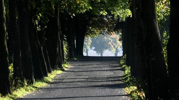 Příroda se oblékla do podzimních barev. Alej u Raspenavy.