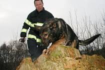 Policejní psi