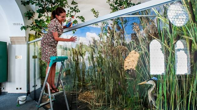 NOVÁ EXPOZICE V LIBERECKÉM MUZEU představuje například jizerskohorské louky, bučiny nebo vodní svět. Na své si přijdou i nejmenší, pro něž je připravena expozice o tom, jak se vylíhne motýl, včetně obří housenky.