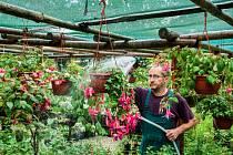 V zahradě libereckého pěstitele Pevného rozkvétají stovky květin.