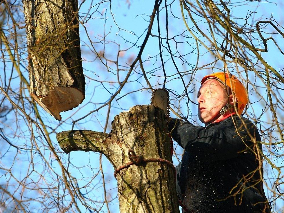 Prořez stromu. Ilustrační snímek.