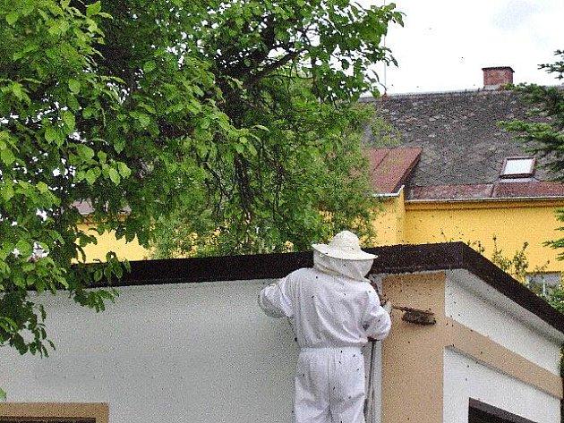 Miloslav Štípek se kromě jiného specializuje na odchyt včel.