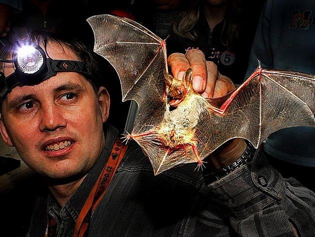 Noc netopýrů. V pátek 28. srpna večer jeskyňáři otevřeli Hanychovskou jeskyni, začali odchytávat, vážit a měřit zde žijící netopýry.