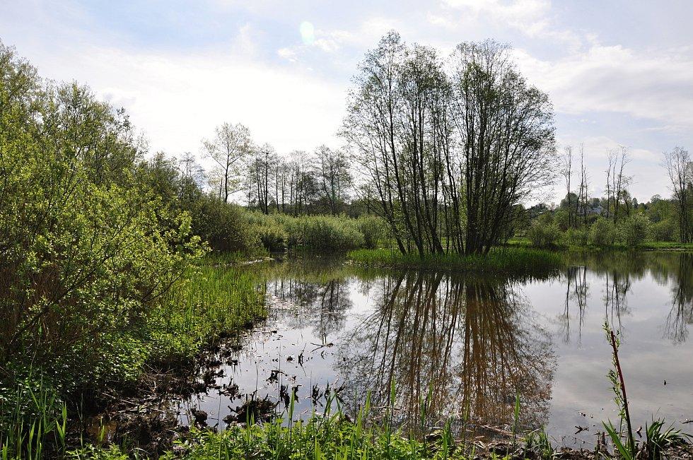Mokřad v Jablonném v Podještědí.