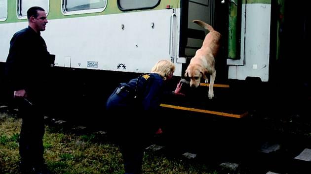 PSÍ HVĚZDA. Osmiletý Ron, mistr Evropy z roku 2004, vyskakuje z vlaku, ve kterém právě našel nastrčený vzorek kokainu.