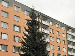 Liberecký vánoční strom 2017.
