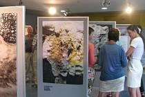 NA SLAVNOSTNÍ OTEVŘENÍ nové výstavy se přišlo podívat mnoho zájemců.