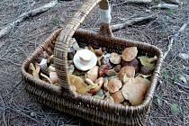 Košík s houbami. Ilustrační foto. Houba, houbaření.