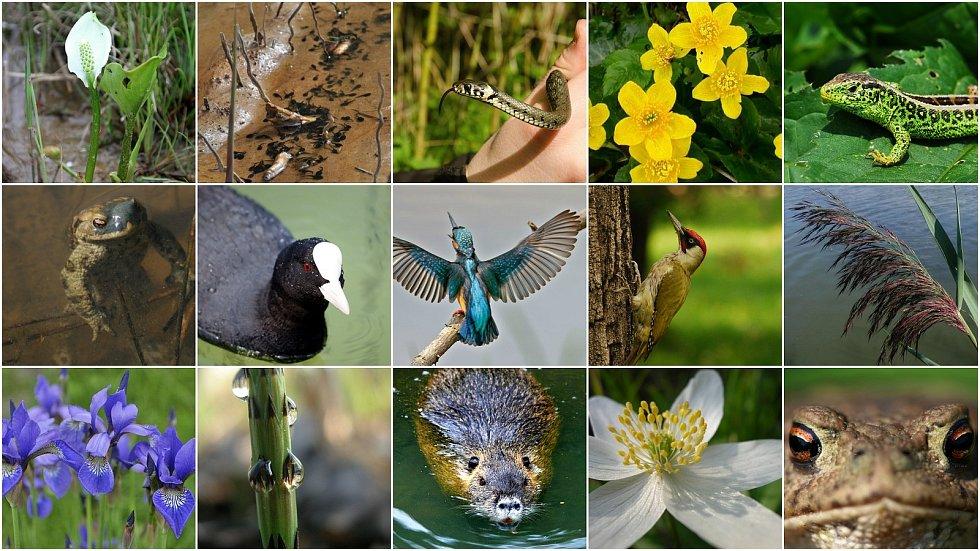 Fauna a flóra v mokřadech.