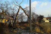 Padlé stromy při páteční vichřici Xaver