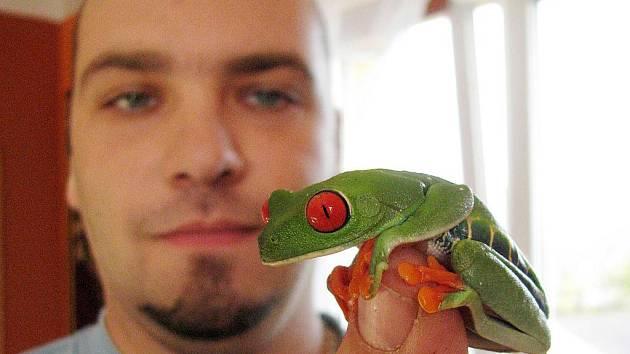 Středoamerická žabka Listovnice červenooká patří mezi Lukášovy svěřence.