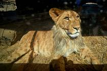 Zoo se sice vyprázdnila, ale péče o zvířata nepočká.
