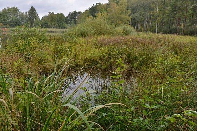 Rybníky, mokřady a tůně vnovém usnadňují život kuňkám ičolkům.