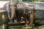 Samice slona indického Bala a Rání se v létě mohou ochladit v nádrži s vodou nebo na sebe hází studený písek. Při velkých vedrech kropí hadicí slony pracovníci zoologické zahrady.