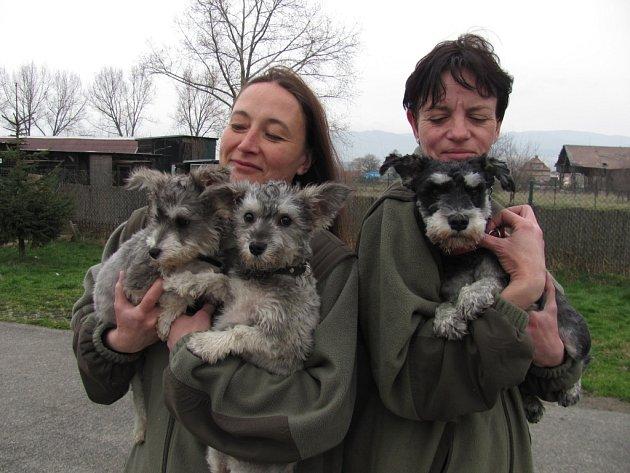 Čuk a Gek, kteří by psí přehlídku krásy zřejmě nevyhráli, svého majitele omrzeli. Odložil je, stejně jako odrostlého knírače Křeníka (vpravo).