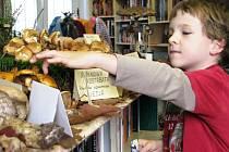 Výstavu hub, a to nejen z Liberecka, dělali u Fryče vloni poprvé. Příští rok ji připraví zase.