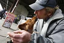 Psi bezdomovců dostanou očkování