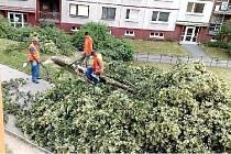 SNÍMEK Z BALKONU ŽALUJE. Jedna z obyvatel sídliště si stihla nafotit kácení zdravých lip v plném květu zbalkonu svého bytu. Jak dodala, stromy zmizely z vnitrobloku během několika dní.