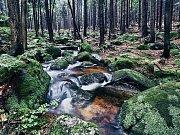 Jan Podešva: strach v lese