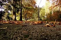 Ondřej Hájek: Podzimní nostalgie