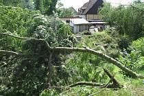 ČERVENCOVÁ BOUŘKA vyvrátila a polámala desítky stromů na Frýdlantsku. I ty jsou nyní k prodeji.