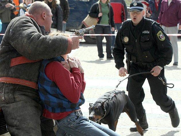 NEOHROŽENĚ SE VRHAJÍ NA NÁSILNÍKA. Několik zásahů, při nichž se služební psi libereckých strážníků neohroženě vrhají na pachatele, předvedli policisté nedávno před libereckou radnicí.