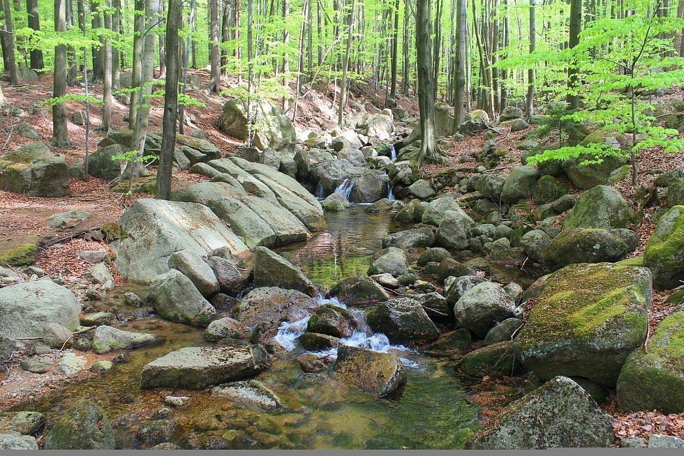 Kouzlo severních svahů, to jsou kamenité plochy čisté vody v chrámu buků.