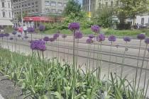 Liberec rozzářila nová výsadba trvalek a cibulovin.