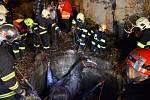 Hasiči zachraňovali koně z jímky, použili záchrannou síť.