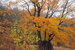 Podzimní krasavec