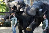 Sloni v liberecké Zoologické zahradě