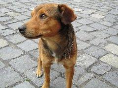 Pes Bedřich