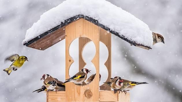 Sčítání ptáků na krmítkách se zúčastnilo už přes 17 tisíc dobrovolníků.