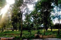 SHERWOOD dnes láká bezdomovce nebo omladinu, která se v parku věnuje nekalým činnostem.