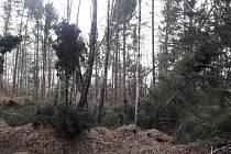 V oblastech Kristiánov a Albrechtice-Dětřichov je zakázán vstup do lesů.