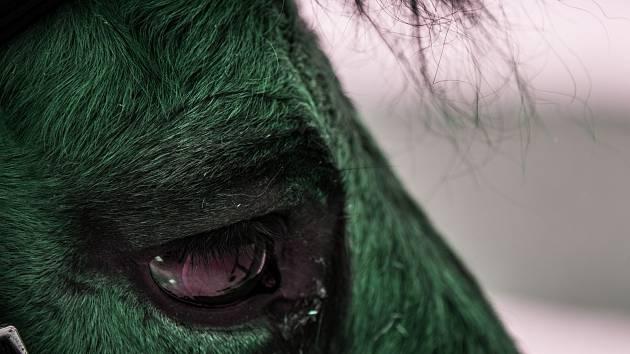 Koně s těžkým životním osudem zachytil svým fotoaparátem teprve patnáctiletý Honza Hubal.