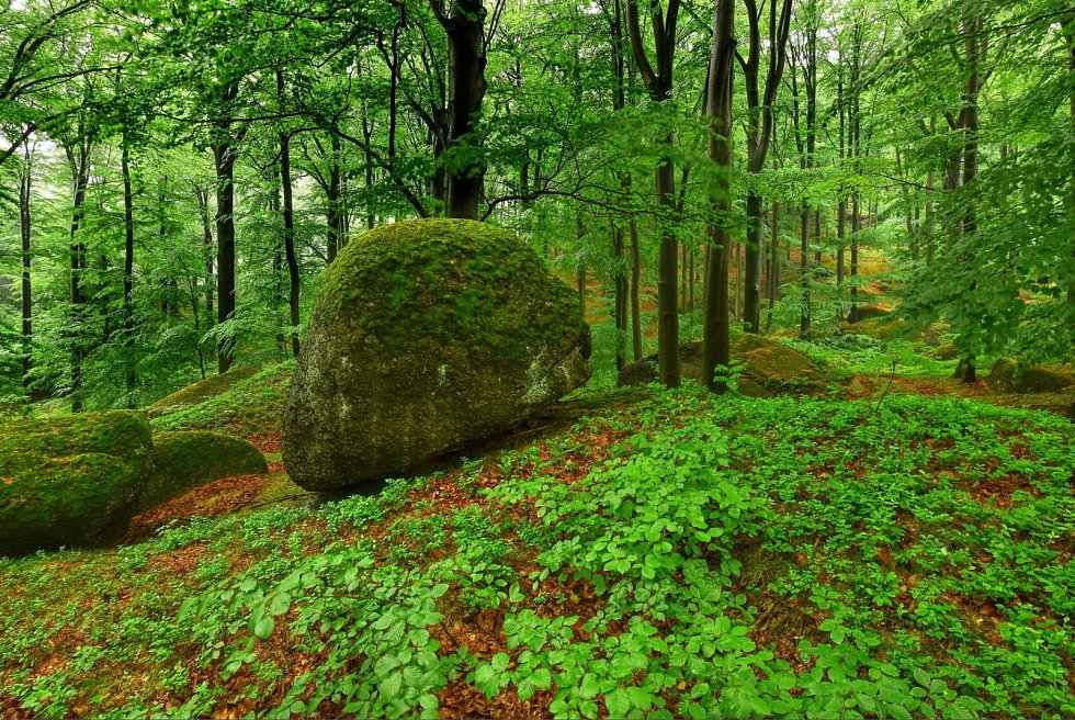 Zelený koberec jarních Jizerek