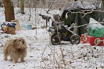 Bezdomovci žijí v lesích nebo v ulicích Liberce. Pohled na jejich skromné příbytky je žalostný.
