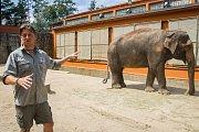 Samice slona indického Bala s ošetřovatelem Václavem Aschenbrennerem v Liberecké zoologické zahradě na snímku z 17. července.