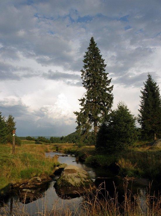 Rašeliniště Jizerky.