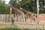 Zoo Liberec se připojila k celosvětovým oslavám Mezinárodního dne zvířat.