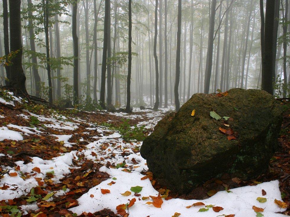 V Oldřichovských lesích