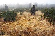 Traviny na Smědavě.