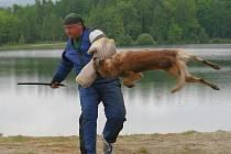 V KŮŽI FIGURANTA. Psi dali figurantovi Karlu Vittišovi pořádně zabrat.