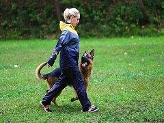Psi budou soutěžit o Liberecký pohár.
